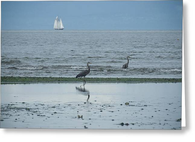 Wading In Shallow Waters Greeting Card