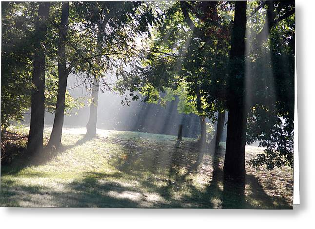 Morning Light Greeting Card by Michael Peychich
