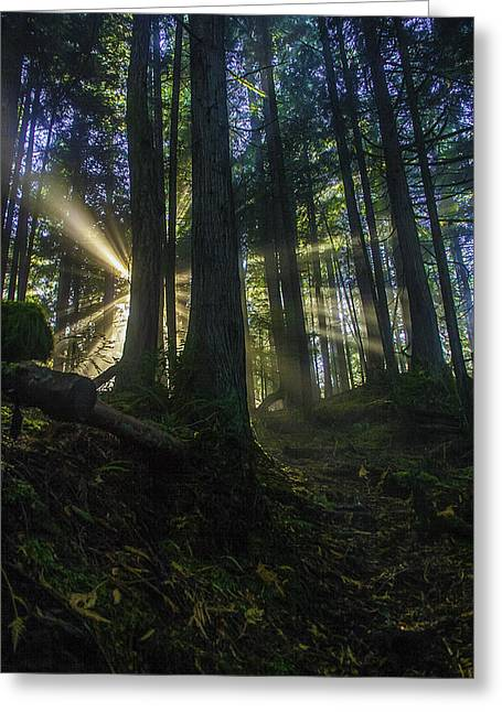 Morning Light Rays Greeting Card