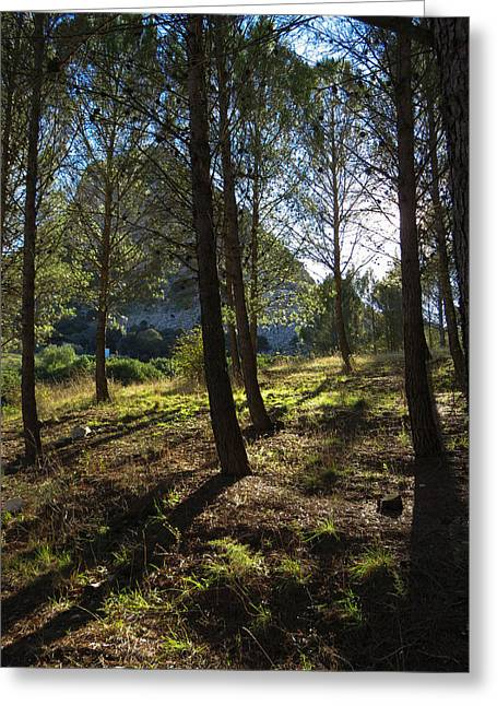 morning light under the pines - La Madre mountain Greeting Card by J Darrell Hutto