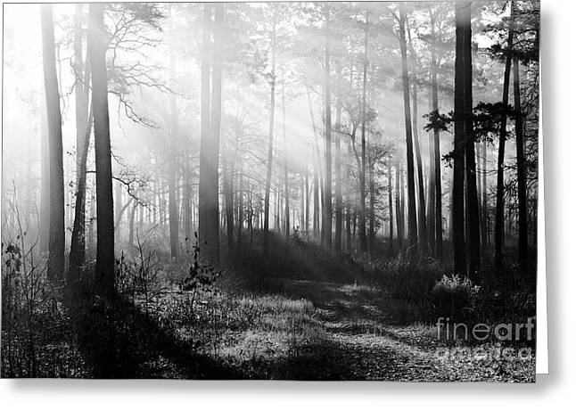 Morning Mist In The Forest Greeting Card