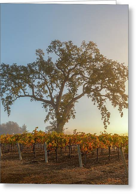 Morning Oak And Vineyard Greeting Card