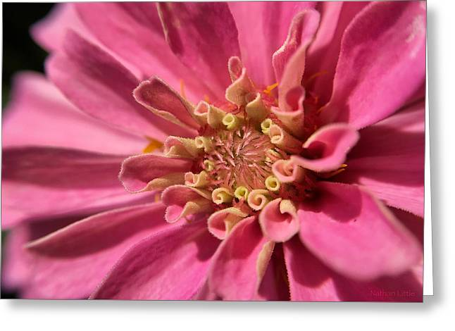 Morning Pink Greeting Card