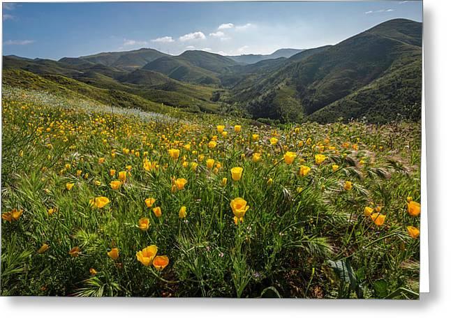 Morning Poppy Hillside Greeting Card