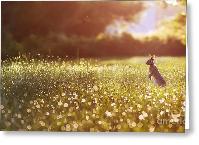 Morning Rabbit Greeting Card