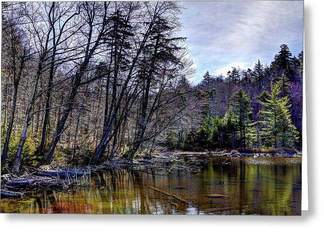 Morning Reflections Greeting Card by David Patterson