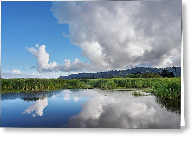 Morning Reflections On A Marsh Pond Greeting Card by Greg Nyquist