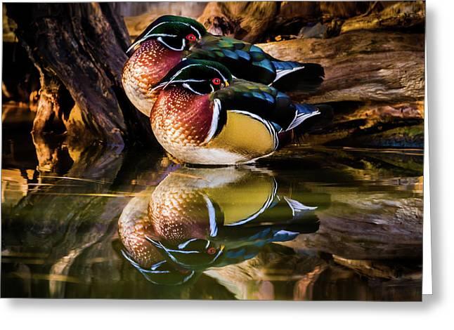 Morning Reflections - Wood Ducks Greeting Card