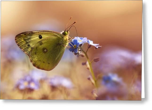 Garden Scene Greeting Cards - Morning rest Greeting Card by Jaroslaw Blaminsky