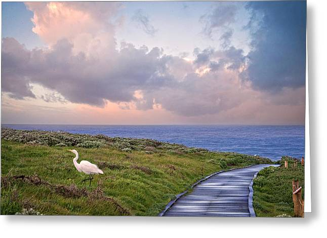 Morning Run Greeting Card by Lynn Bauer