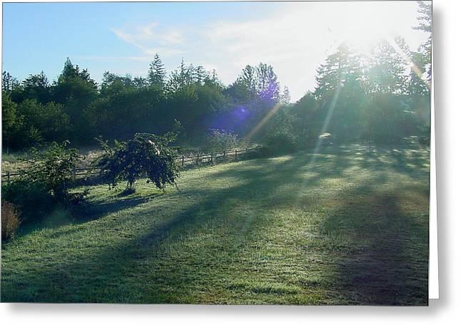 Morning Shadows Greeting Card by Shirley Heyn