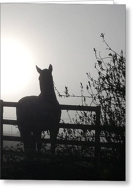 Morning Silhouette #1 Greeting Card