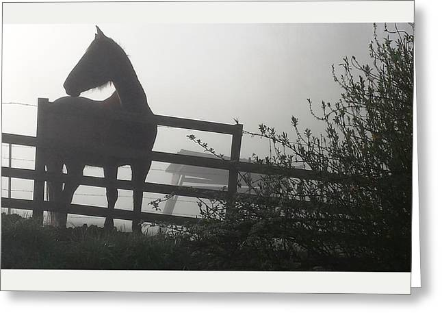Greeting Card featuring the photograph Morning Silhouette #2 by Deb Martin-Webster
