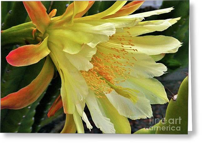 Morning Splendor Greeting Card
