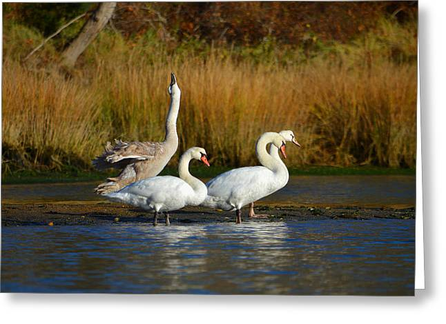 Morning Stretch In November Greeting Card