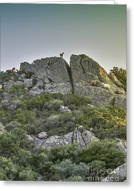 Morning Sun Lit Rocky Hill Greece Greeting Card by Jivko Nakev