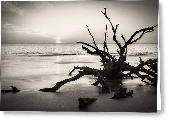 Morning Sun On Driftwood Beach In Black And White Greeting Card