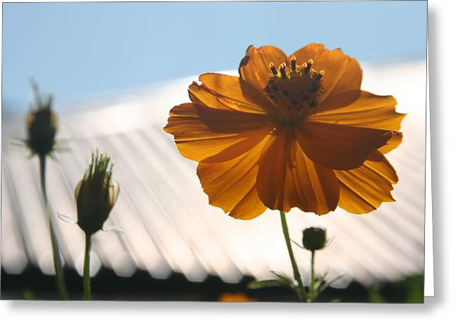 Morning Sunlight Greeting Card by Linda Russell