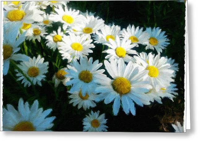 Morning Sunlight On Daisies Greeting Card