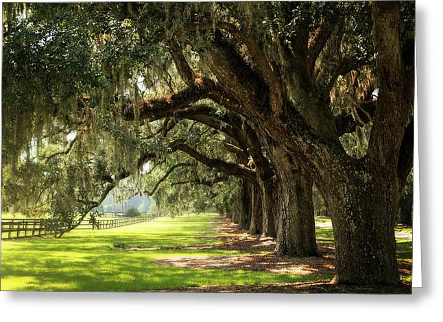 Morning Under The Mossy Oaks Greeting Card