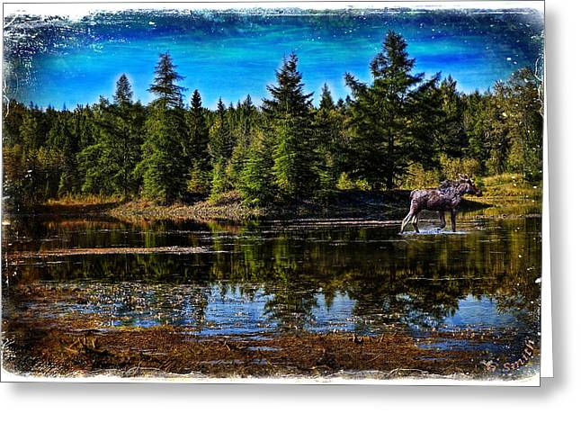 Greeting Card featuring the photograph Morning Walk by Gary Smith
