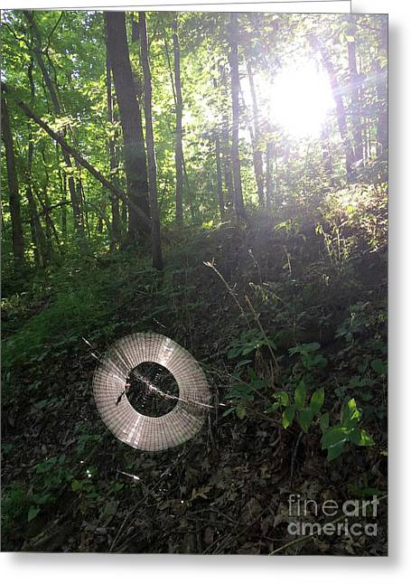 Web Weaving In The Early Morning Forest Greeting Card
