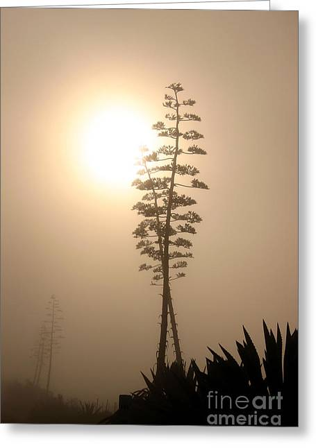 Morning Yucca Greeting Card