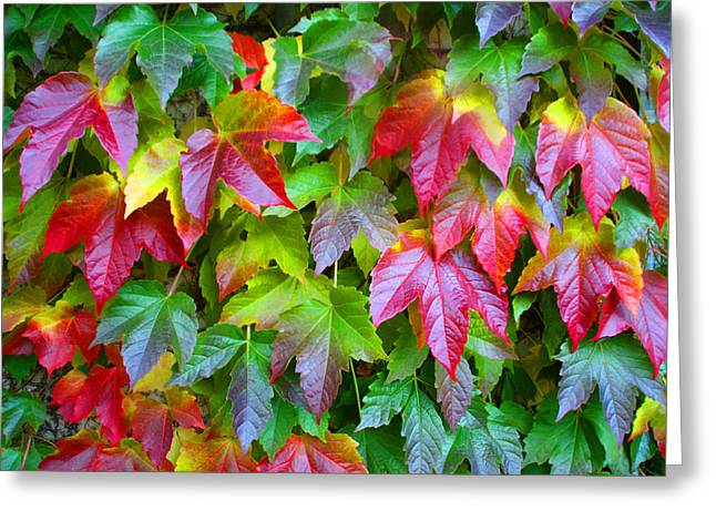 Moselle Valley Leaves Greeting Card