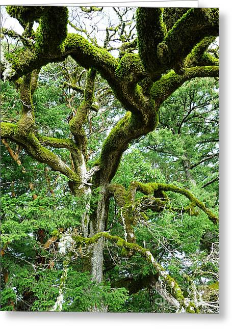 Moss Covered Arms Greeting Card by JoAnn SkyWatcher