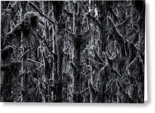 Moss Covered Trees Black And White Greeting Card