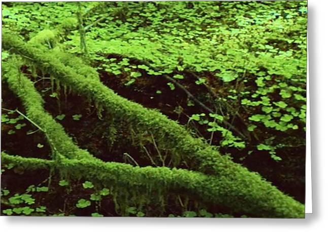 Moss Fungei Herbs Grow Over The Deadwood Natures Own System Of Recycle And Optimization Of Resources Greeting Card