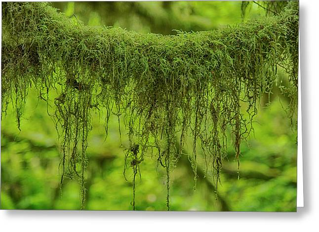 Moss Garland Greeting Card by Stephen Stookey