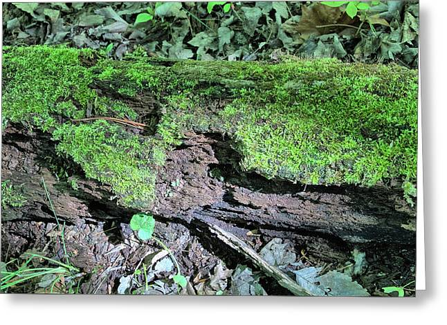 Greeting Card featuring the photograph Moss On A Log 2 by Richard Goldman