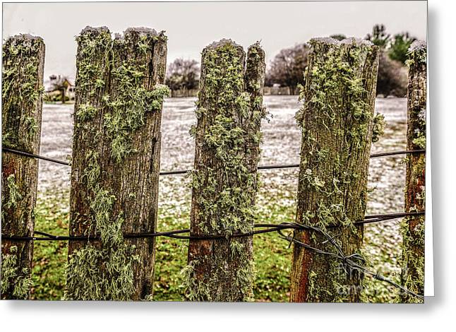 Moss On A Wintery Fence Greeting Card by Lexa Harpell