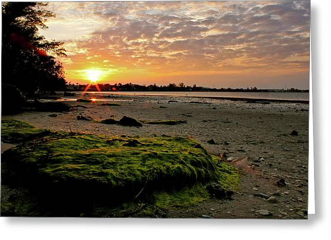 Moss Green Greeting Cards - Moss on the Beach Greeting Card by Angie Wingerd