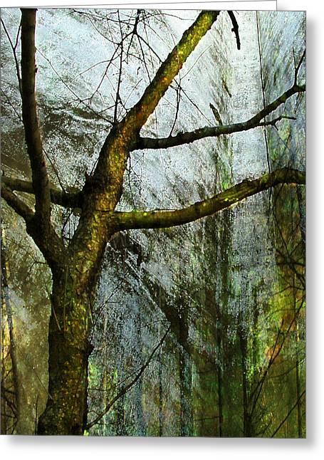 Moss On Tree Greeting Card by Ken Walker