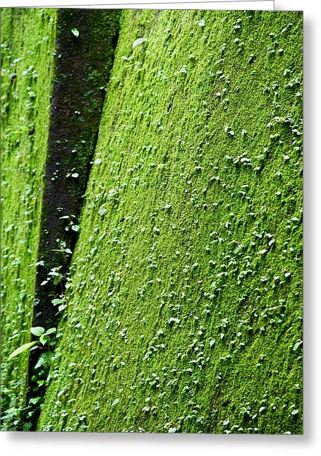Moss Greeting Card by Pramod Bansode