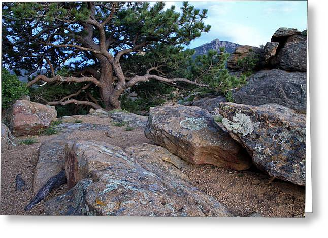 Moss Rocks And A Tree Greeting Card by James Steele