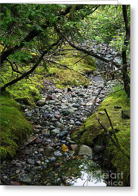 Moss Stream Greeting Card
