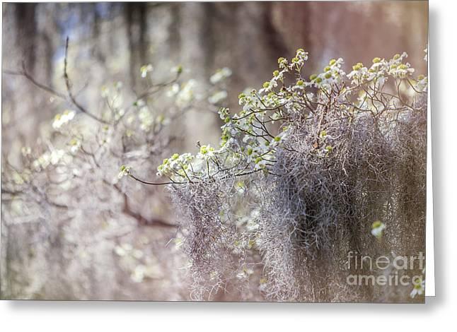 Mossy Dogwoods Greeting Card by Joan McCool