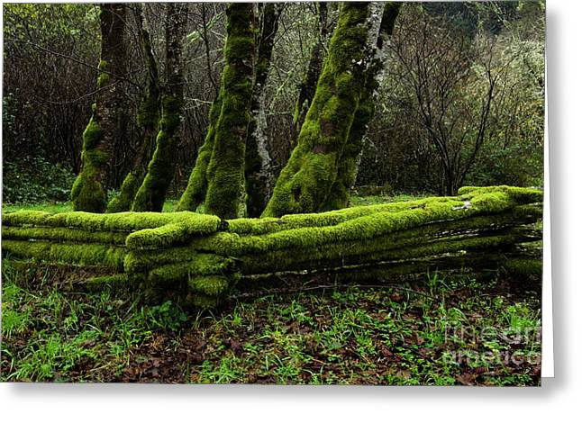 Cedar Fence Greeting Cards - Mossy fence 3 Greeting Card by Bob Christopher