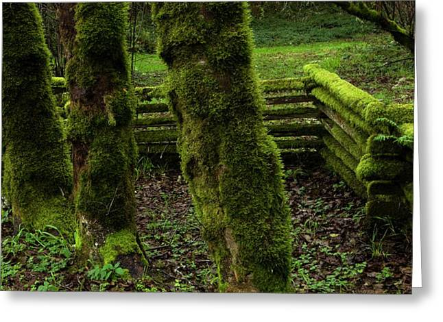 Cedar Fence Greeting Cards - Mossy Fence Greeting Card by Bob Christopher