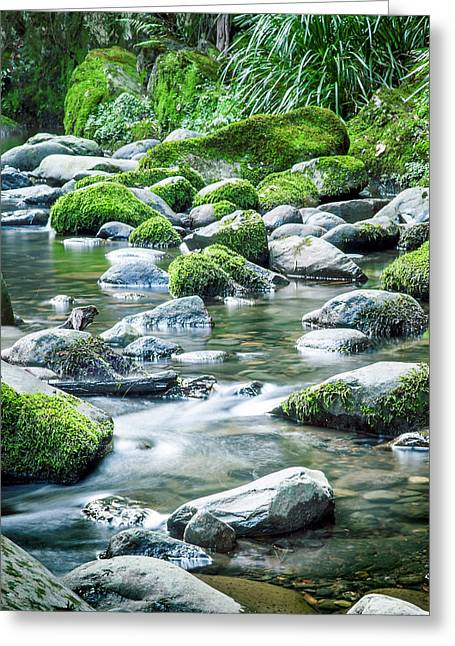 Mossy Forest Stream Greeting Card by Az Jackson