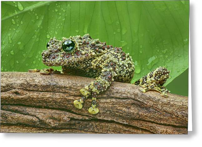 Greeting Card featuring the photograph Mossy Frog by Nikolyn McDonald