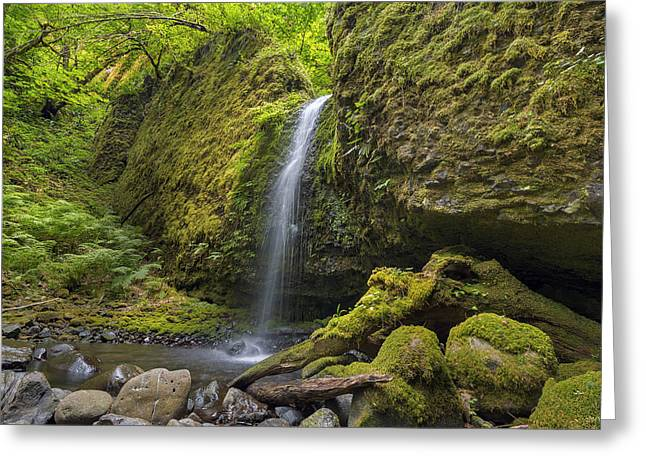 Mossy Grotto Falls In Summer Greeting Card by David Gn