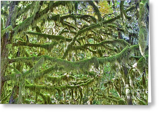 Mossy Maze Greeting Card