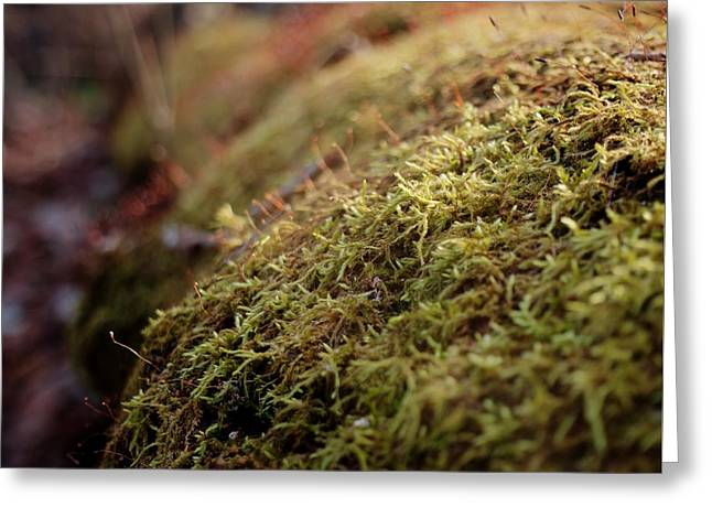 Greeting Card featuring the photograph Mossy by Michael Colgate