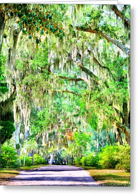 Greeting Card featuring the photograph Mossy Oak Pathway H D R by Lisa Wooten