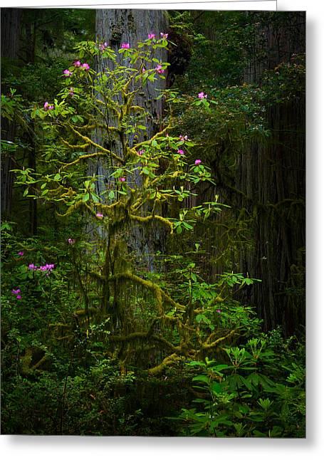 Mossy Rhododendron Greeting Card by Thorsten Scheuermann