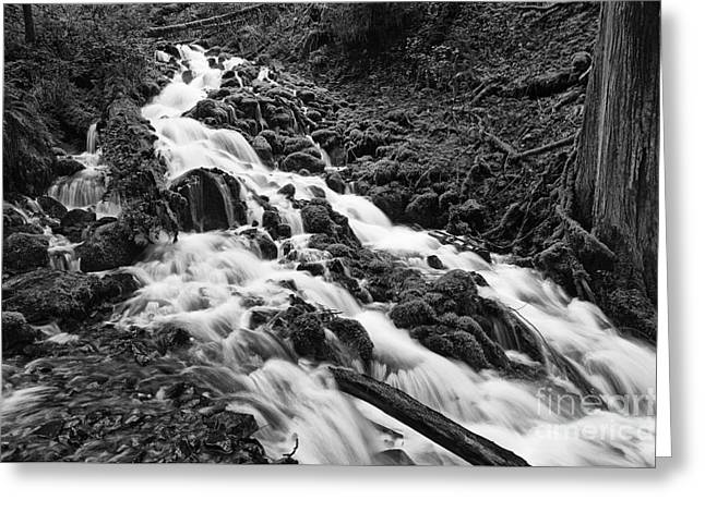 Mossy River Greeting Card